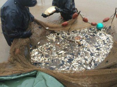 L'Angottiere Carp Fishery