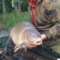 carp capture at l'angottiere carp fishery offering exclusive carp fishing in france