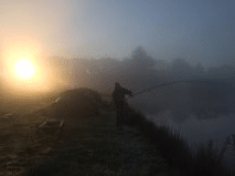 carp at dawn. L'Angottiere Carp Fishery