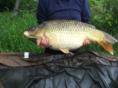 carp caught at L;angottiere