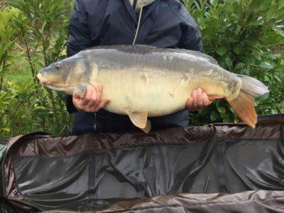 carp caught at l'angottiere by gary wheat