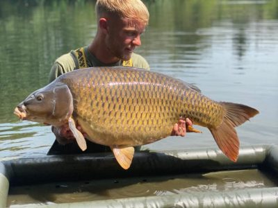 common carp from L'Angottiere carp fishery in france